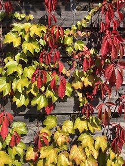Autumn, Leaves, Nature, Fall Foliage, Leaf, Fall Leaves