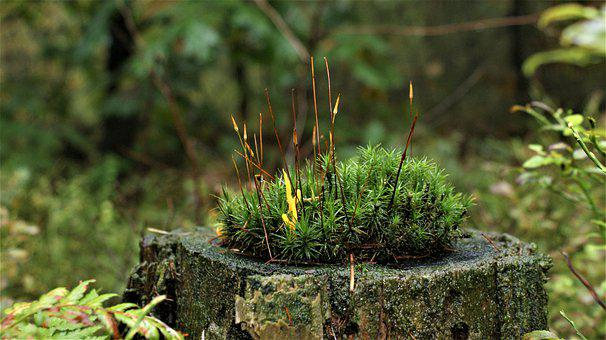 Moss, Forest, Tree Stump, Autumn, Nature, Season, Magic