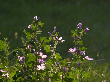 Flowers Of The Field, Flowers, Meadow, Nature, Bloom