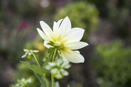 White Flower, White, Bloom, Garden, Spring, Blossom