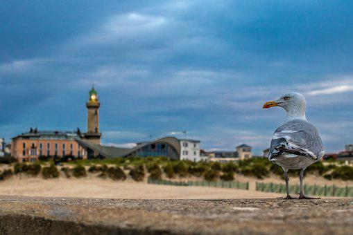 Lighthouse, Stand, Bird, Seagull, Coast, Dunes