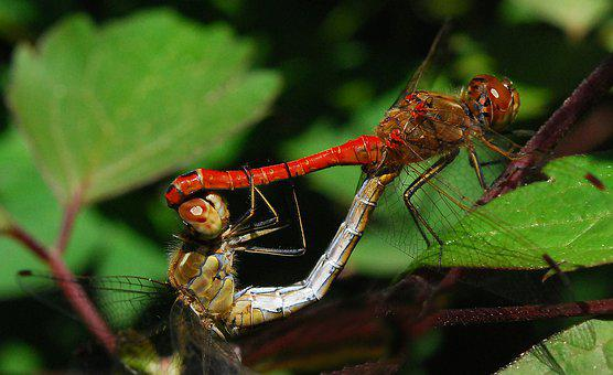 Dragonfly, Nature, Summer, Plant, Garden, Wing, Color