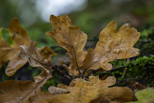Leaves, Boxer Shorts, Autumn Mood, Colorful