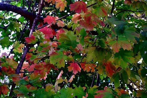 Autumn, Tree, Foliage, Colorful, Nature, Park