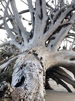 Botany Bay, Edisto Island, Deadwood, Beach, Fallen Tree