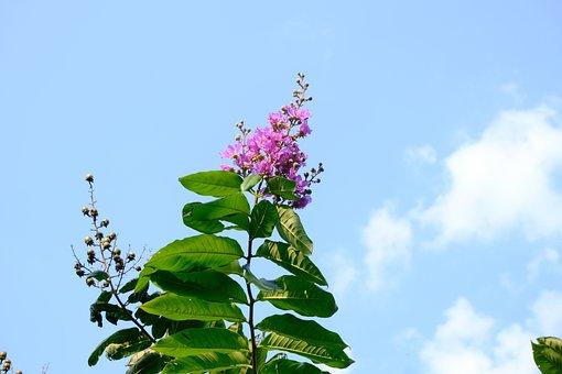 Flower, Spring, Sky, Garden, Plant, Blossom, Bloom