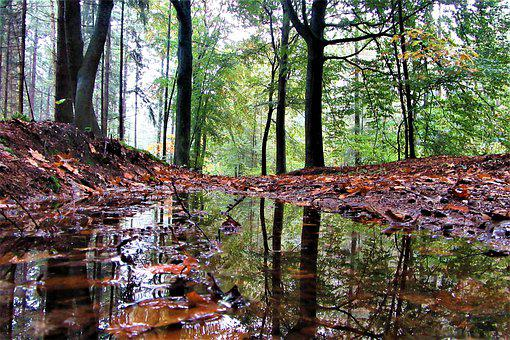 Forests, Hiking, Plas, Reflection, Water, Rain
