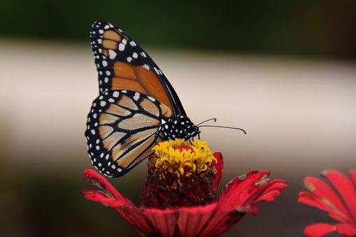 Butterfly, Flower, Macro, Insect, Spring, Garden