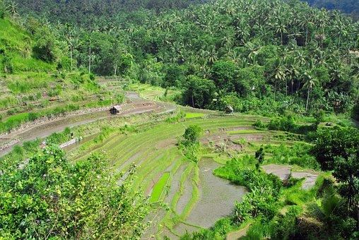 Indonesia, Bali, Rice, Landscape, Agriculture, Terraces