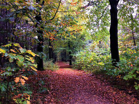 Path, Forest, Autumn, Light, Forests, Vote, Magic