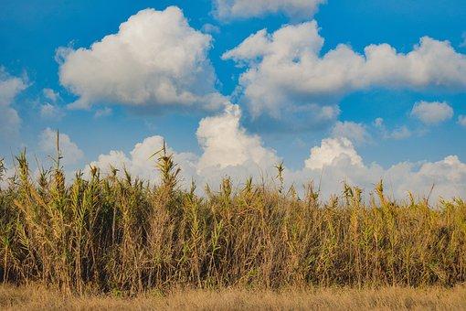 Reeds, Sky, Nature, Landscape, Clouds, Autumn