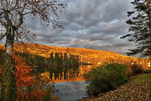 Landscape, Nature, Clouds, Sky, Trees, Birch, Fir