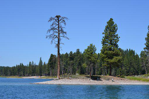 Trees, Lake, Nature, Water, Landscape, Forest, Summer