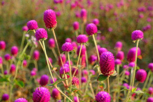 Purple, Flower, Spring, Nature, Blossom