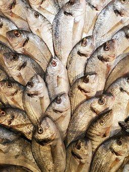 Fish, Marine, Food, Market, Hunting, Product, Ocean