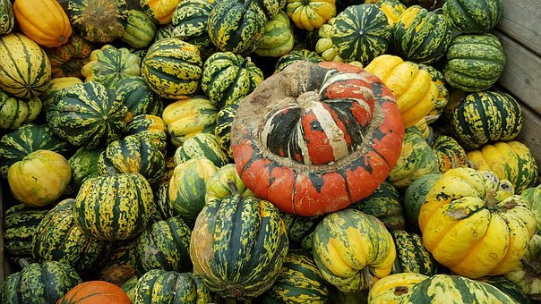 Autumn, Pumpkin, Halloween, Vegetables, Harvest, Orange