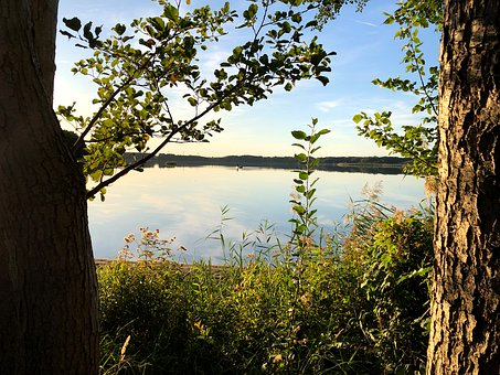 Lake, Bank, Lake View, Waters, Trees, Relaxation