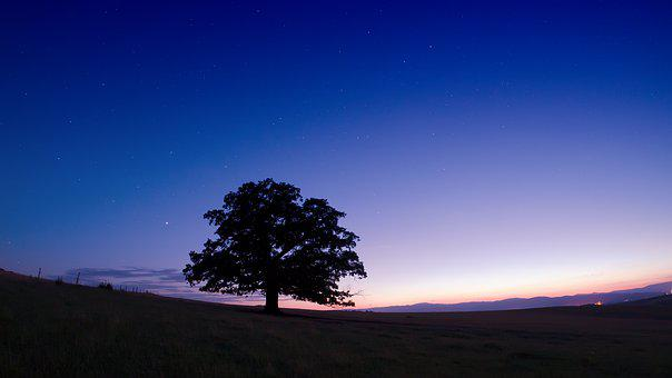 Tree, Sunrise, Blue, Hour, Landscape, Sky, Light