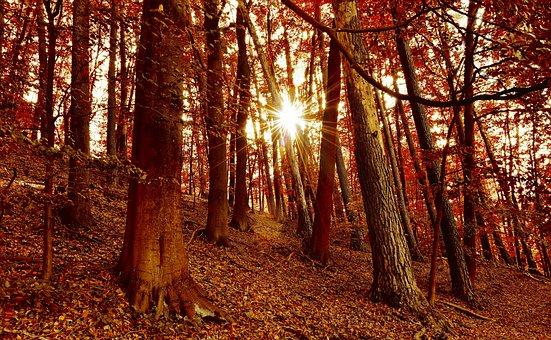 Autumn Forest, Autumn, Sun, Sunbeam, Forest, October