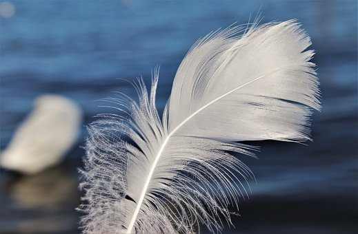 Swans, Pen, White, Flying, Air, Delicate, Fluffy