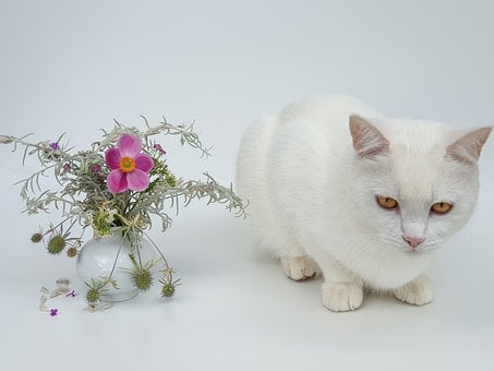 A Bunch Of Flowers, Tender, Romantic, Cat White