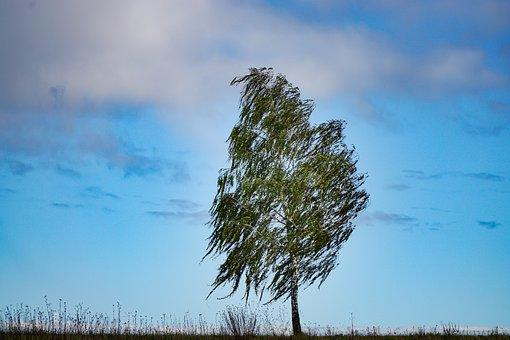 Tree, Birch, Nature, Landscape, Sky, Twilight
