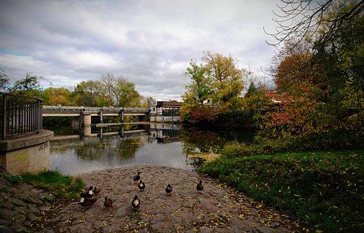 Ducks, Erfurt, Gera, River, Weir, Three Brunnenbad