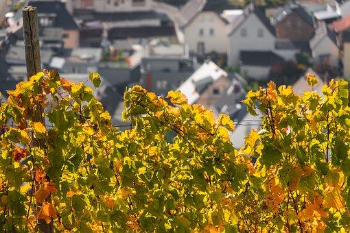 Vine, Wine, Vines, Wine Village, Houses, Village