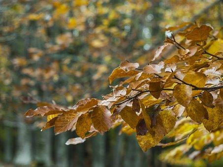 Autumn, Trees, желтое7, Landscape, Nature, Fog, Mood