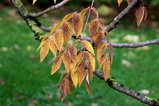 Autumn Leaves, Leaves, Trees, Garden, Gardening, Beauty