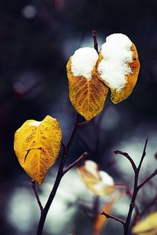 Foliage, Autumn, Winter, Snow, Yellow, Nature, Collapse