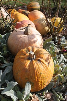 Pumpkins, Autumn, Halloween, Food, Decorative, Yellow