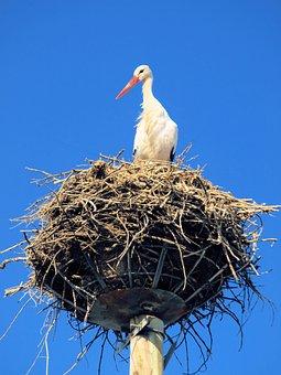 Bird, Stork, Nest, Wildlife, Sky, Blue