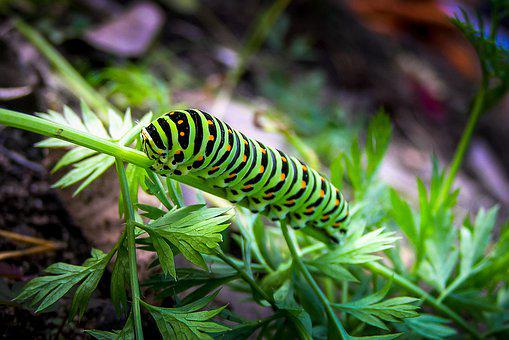 Caterpillar, Green, Insect, Nature, Animals, Worm