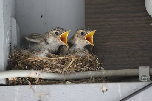 Young Birds, Boy, Nature, Chicks, Plumage, Cute