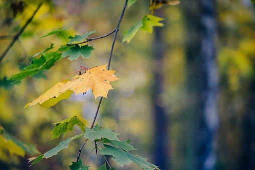 Autumn, Foliage, Colors, Yellow, Clone, Colorful, Mood
