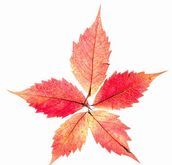 Autumn, Leaves, Red, Yellow, Color, Pattern, Colorful