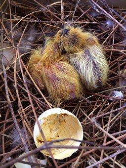 Hatching, Golden Egg, Golden, Young, Cute, Nature, Fur