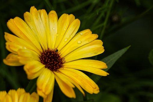 Flower, Blossom, Bloom, Yellow, Green, Evening
