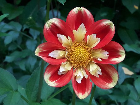 Flower, Nature, Plants, Garden, Romantic, Beauty