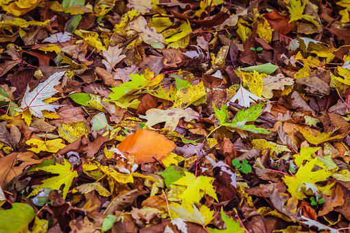 Autumn Leaves, Colorful Leaves, Autumn, Forest, Foliage