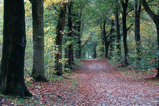 Trees, Tree-lined Street, Forest, Leaves, Autumn