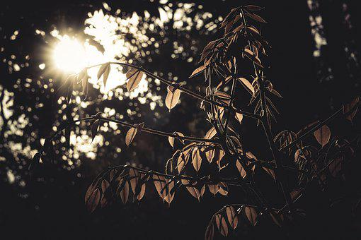 Nature, Sunday, Leaves, Outdoors, Forest, Sunset