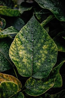 Leaves, Leaf, Green, Rain, Forest, Nature, Structure