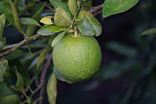 Citrus, Food, Plant, Fruit, Healthy, Juicy, Fresh