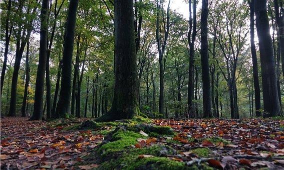 Forest, Trees, Autumn, Leaves, Landscape, Nature