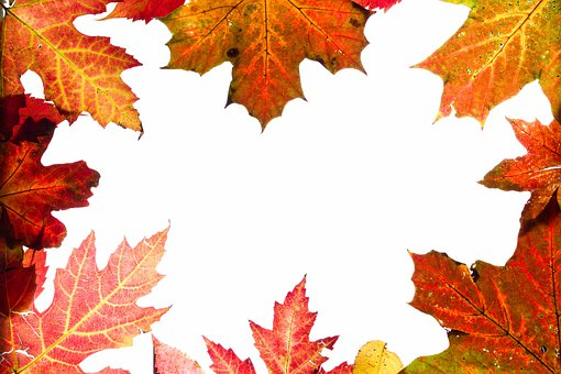 Autumn, Leaves, Background, Colorful, Red, Orange