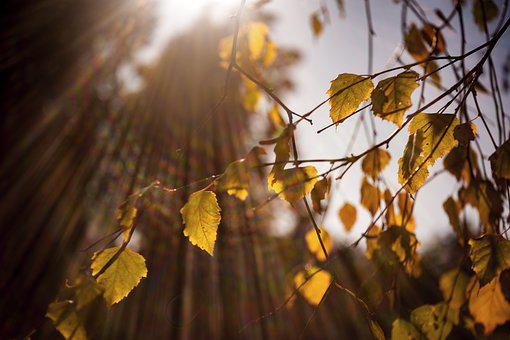 Sun, Leaves, West, Tree, Light, Forest, Sheet, Trees