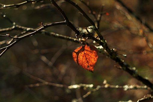 Autumn, Forest, Nature, Trees, Light, Tree, Lighting