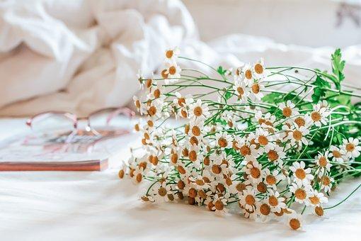 White, Bed, Book, G, Morning, Flower